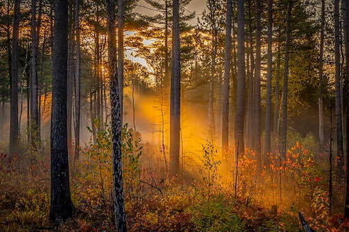 Autum morning by David Johnson.