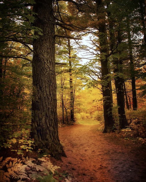 Jay Cooke State Park by Heidi Beal.