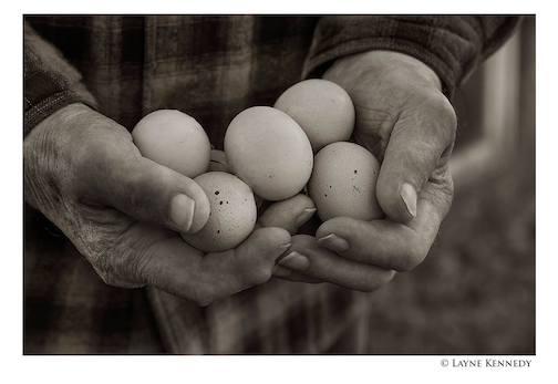 Wayne Anderson. Farm eggs by Layne Kennedy.