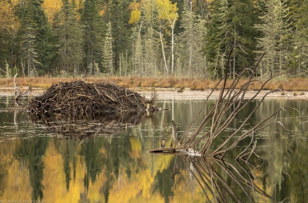 Autumn Beaver Dam by Travis Novitsky.